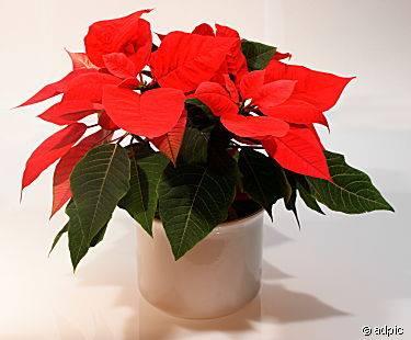 Frohe Weihnachten und ein glückliches Neujahr