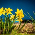 Frühjahrsmüdigkeit leichter überwinden